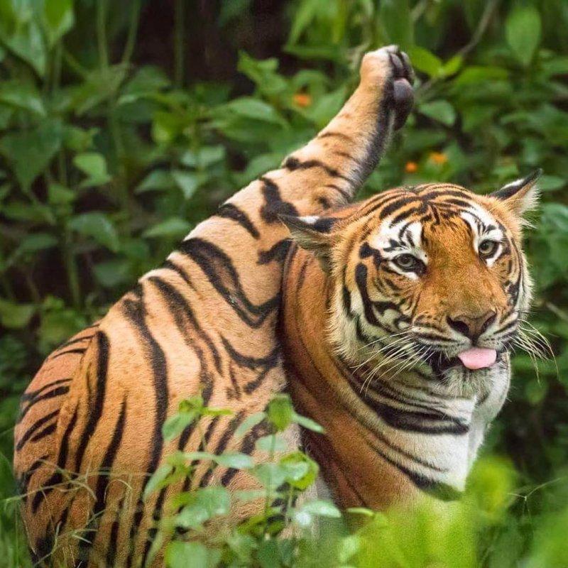20 забавных фото диких животных, которые зарядят позитивом на всю неделю дикая природа, лев, слон, смешные животные, смешные фото, тигр