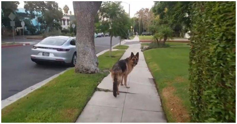 Хозяин подшутил над своей собакой