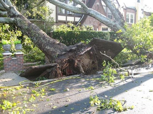В Москве дерево упало на женщину на Ленинском проспекте