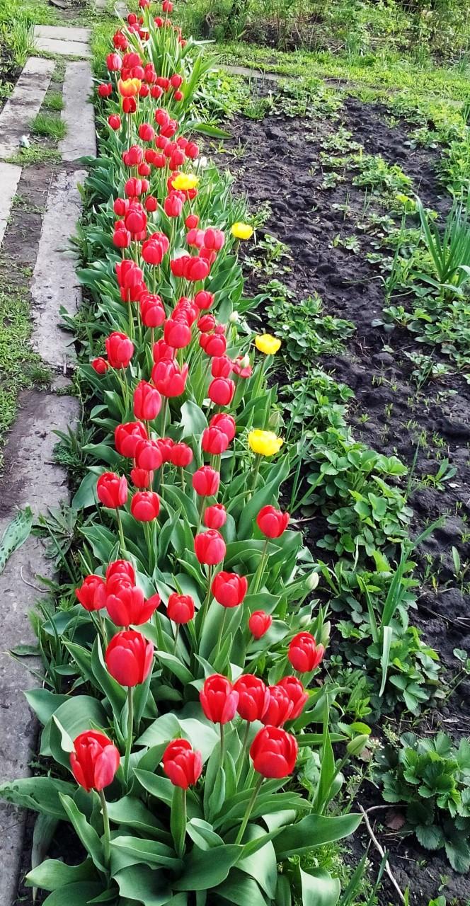 Моя весна...
