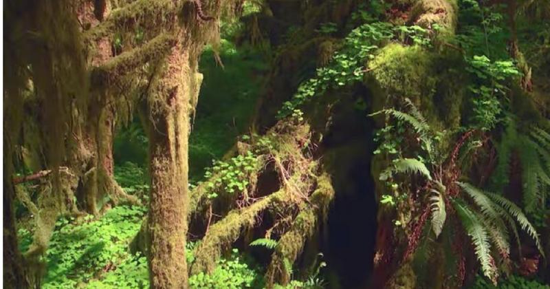 Этот человек бросил жизнь в городе и больше 25 лет живет в лесу. Узнайте почему!