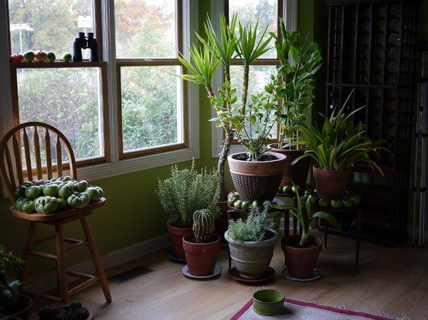 Комнатные растения приносящие в дом несчастье