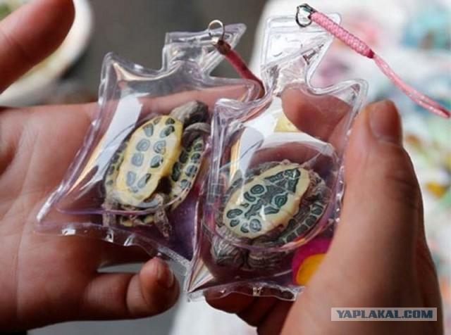 В Китае люди продают их в виде брелоков