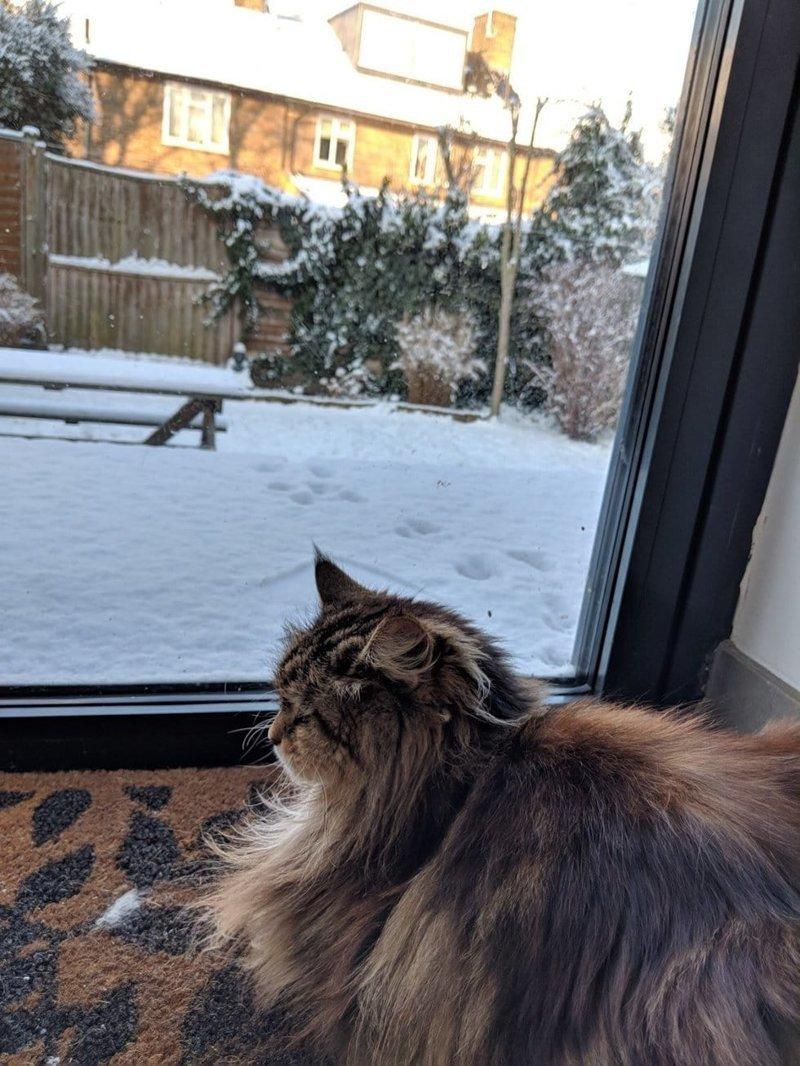 Вскоре после переезда Рози обнаружила кошку у себя в коридоре. Та спокойно спала, словно её не смущало, что это чужой дом в мире, история, люди, поклонник, цветы