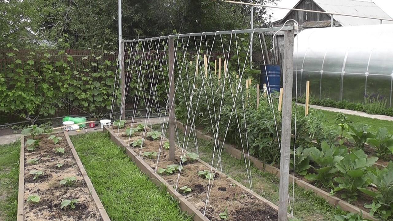 Делаем шпалеры для огурцов и помидоров