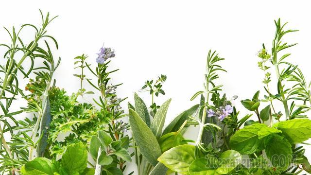 Растения - лекари