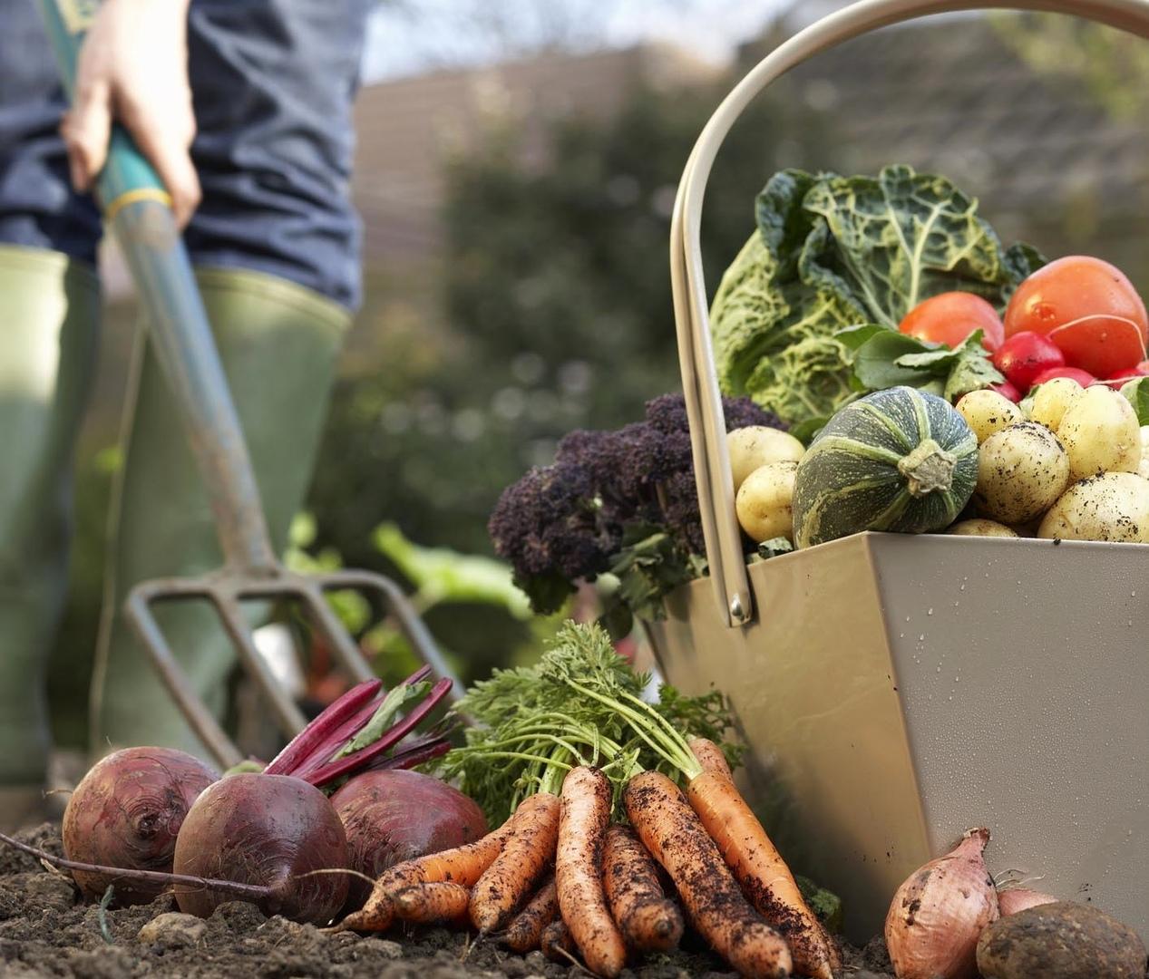 Самые живучие сорта овощей для самых ленивых и начинающих садоводов