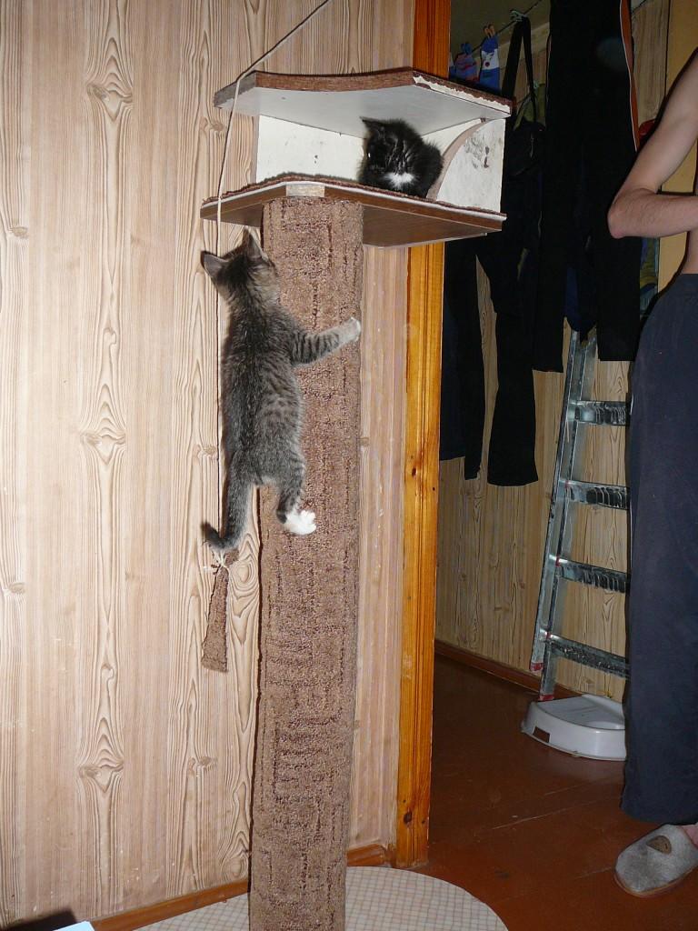 Когтеточка для кошки своими руками на стену 168