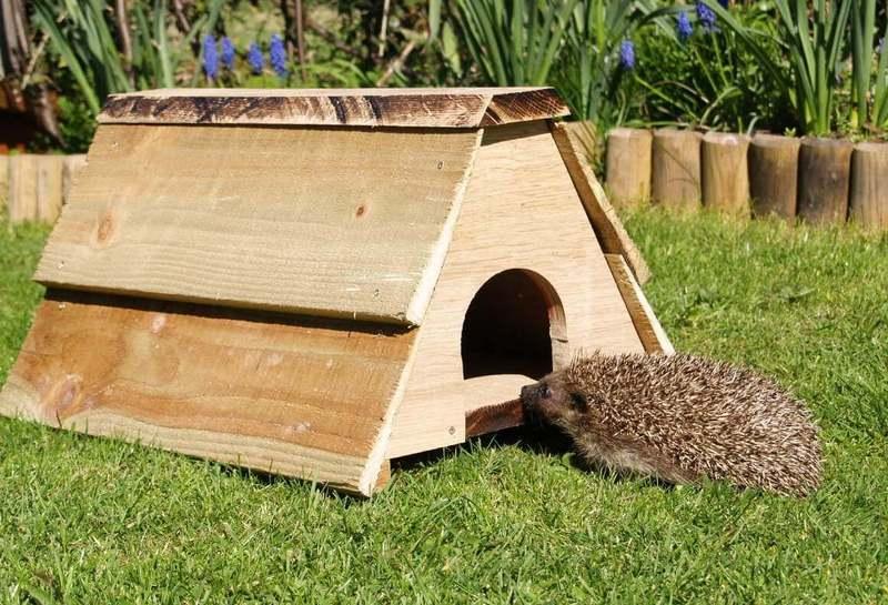 Строим уютный дом для ежика