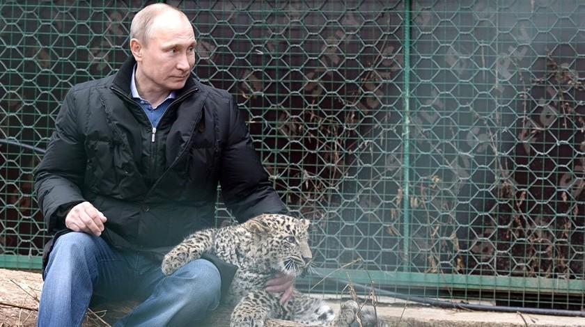 Котёнок, которого убил Путин