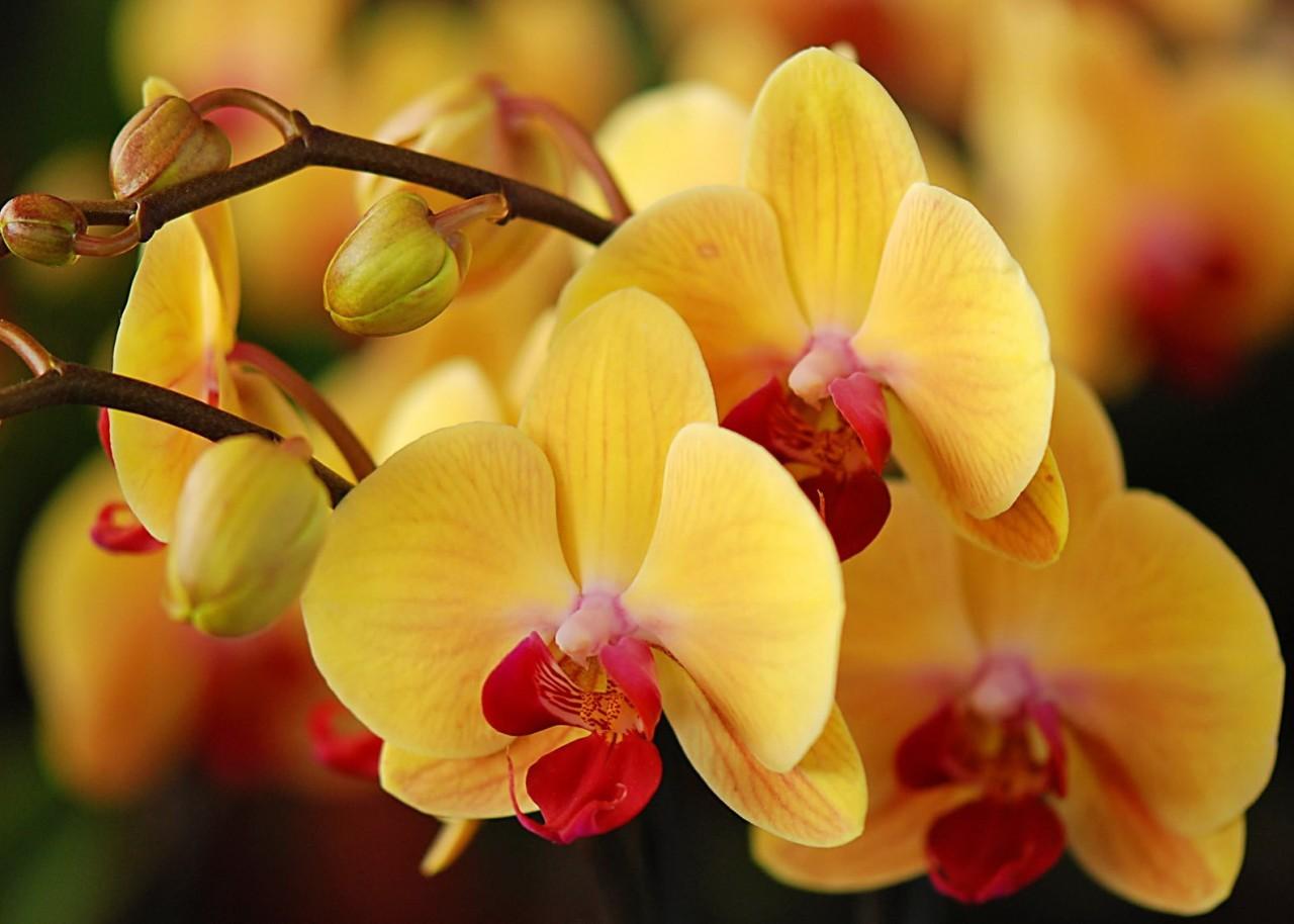 Orchids_08