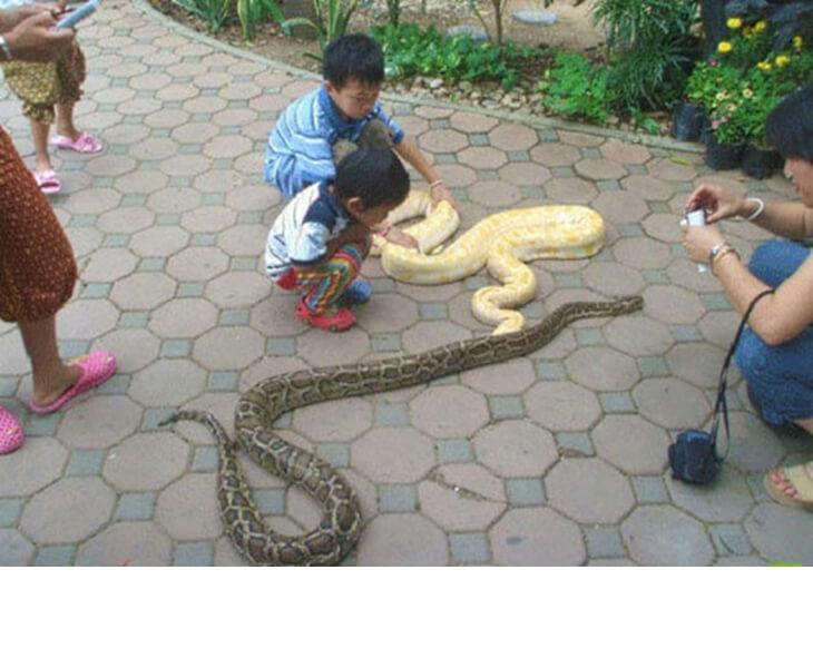 ...Что змеи - их любимые домашние животные
