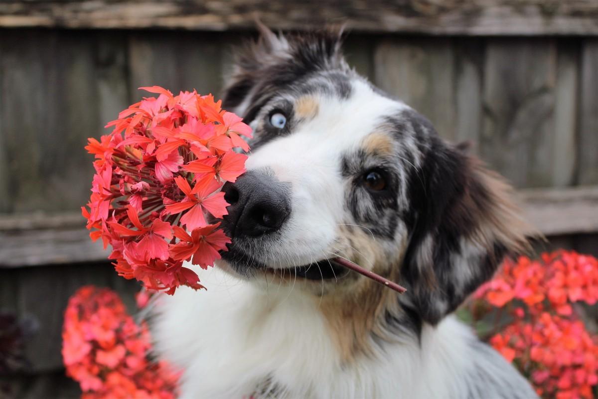 Собака и сад: 9 золотых советов, как уберечь растения от питомца и создать для него условия в саду