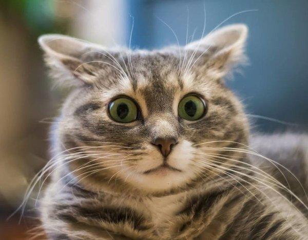 Как кошки землетрясение предсказывали