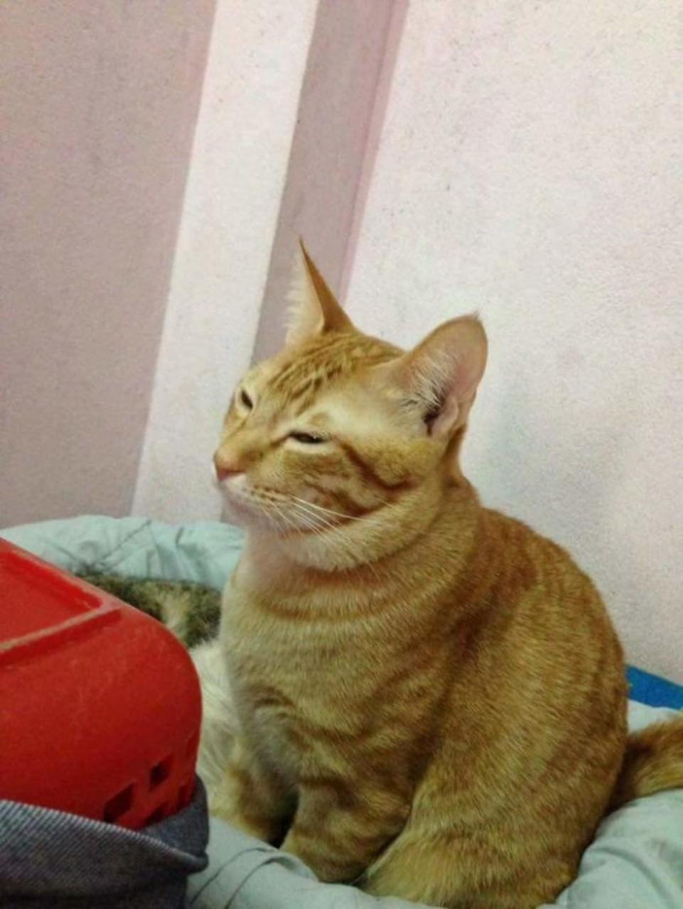 Кот поддерживал кошку во время родов. Кошачья семья покорила тысячи сердец