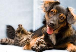 znakomim cat and dog1