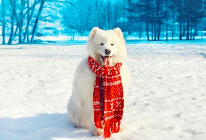 Как заботиться о питомцах с наступлением холодов