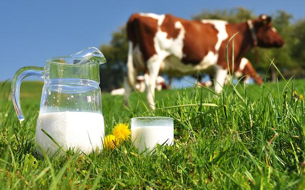 Молоко: пить или не пить?