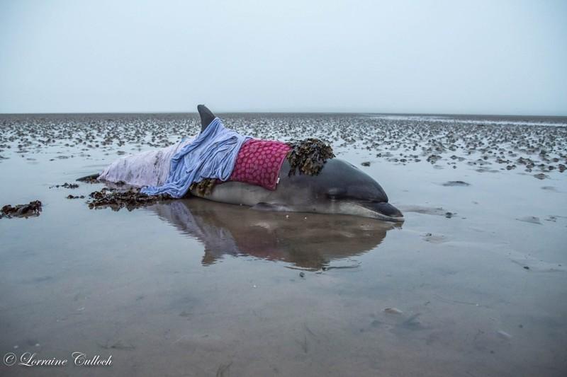 Ошибка навигатора помогла спасти дельфина