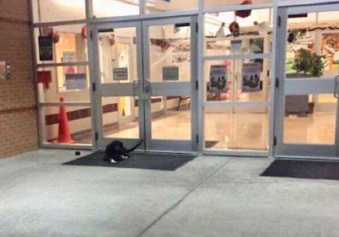 «Сирота под школой»: жалкий пес сидел у двери, ожидая, что однажды кто-то ему поможет