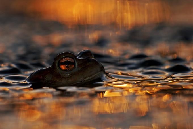 Wildlife Photographer 2013 // Живая природа