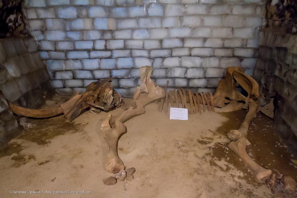 Экскурсия в музей мамонта в Хатанге