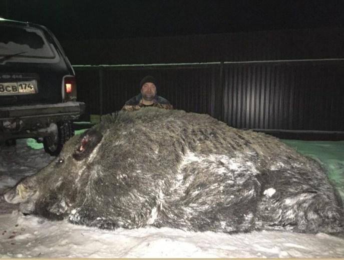 Охотник на Урале завалил гигантского кабана весом полтонны!