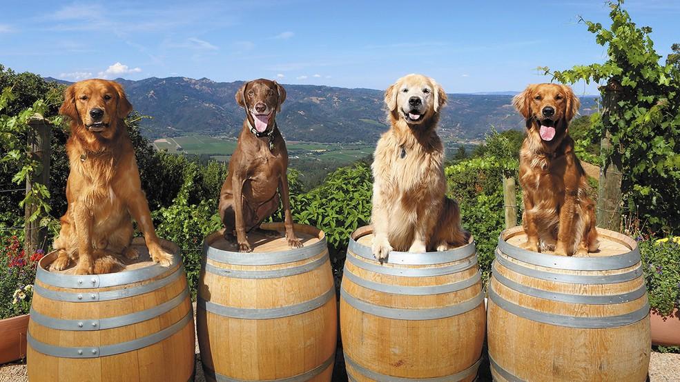 Винный блог. В США выпустили серию книг про собак виноделов