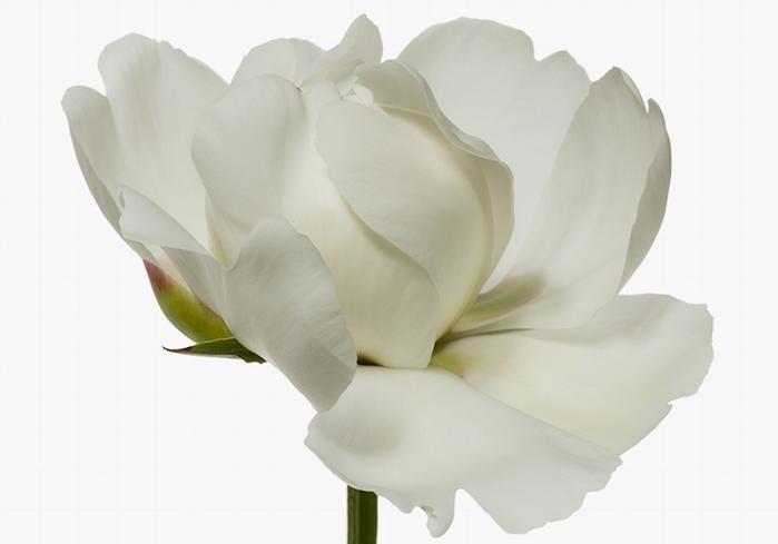 Пусть расцветают сто цветов: гламурный фотоцикл Paul Lange