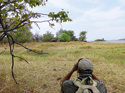 Саванны Восточной Африки глазами русского натуралиста