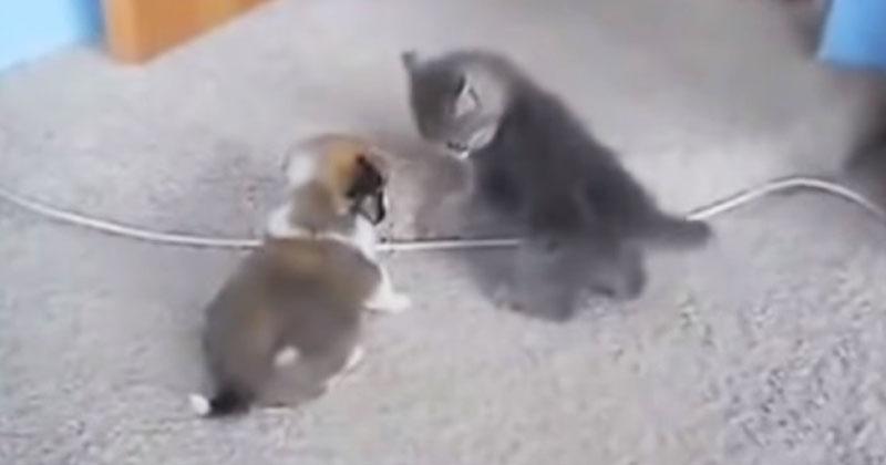 Щенок и котенок впервые встретились и не понравились друг другу. Посмотрите на их реакцию!