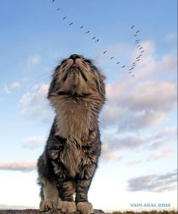 С Днем кошки!