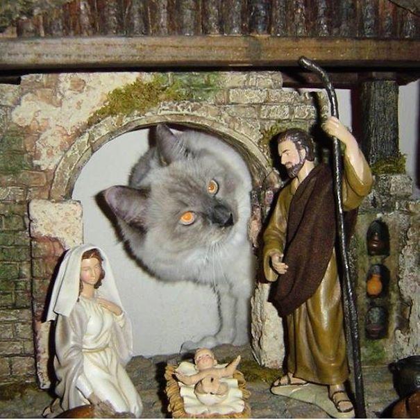 25 кошек, идеально вписавшихся в рождественский вертеп