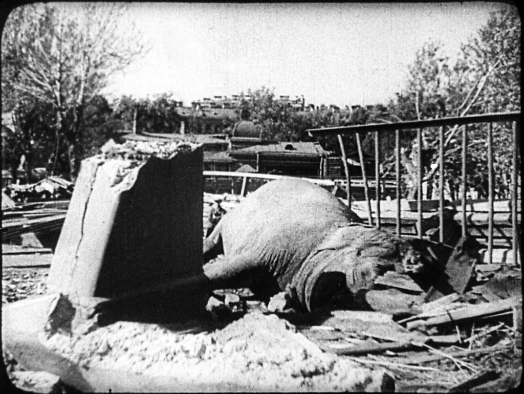 spbzoo06 Как ленинградский зоопарк пережил блокаду