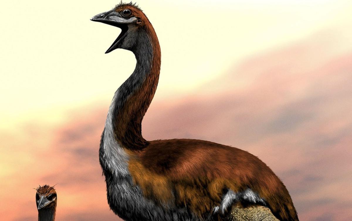 Самой крупной птице в истории дали новое имя