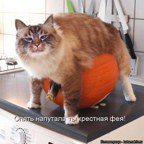 Лучшая котоматрица недели (36 фото)