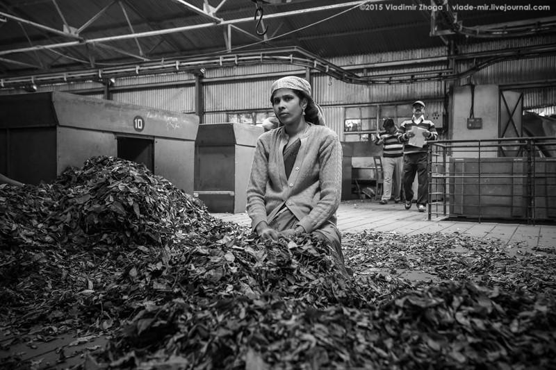 Экскурсия на завод чая в Индии