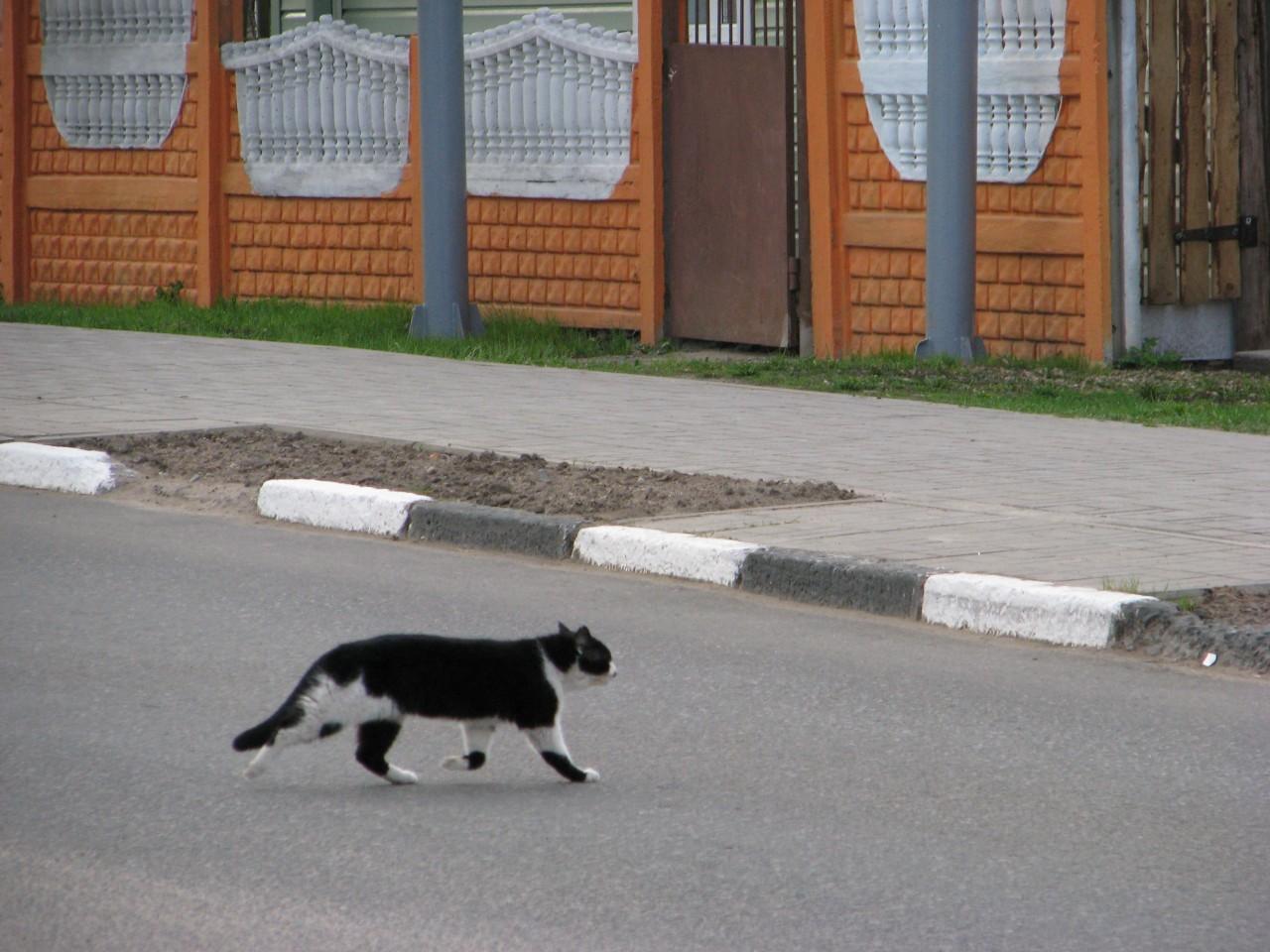 Братья наши меньшие: коты нашего детства