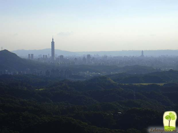Гигантский небоскреб Тайбэй 101 в Тайване - 13