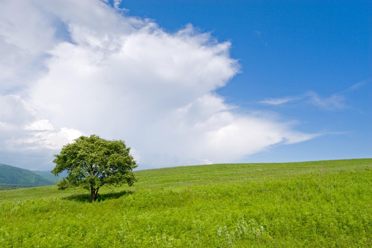 Одинокое дерево. красота, природа, россия