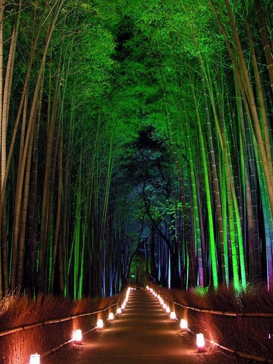 Бамбуковая роща Сагано. Ночная подсветка.