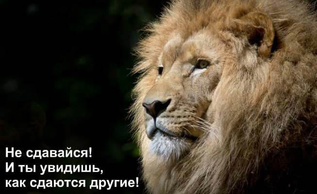 pozitivnye_kartinki_12