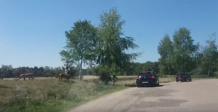 Опубликовано видео нападения гепардов на семью туристов