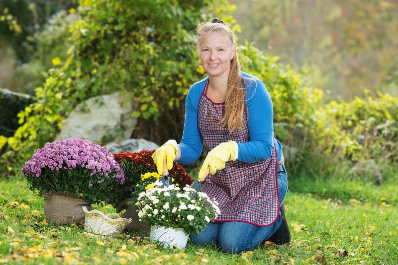 Как оформить клумбу с хризантемами