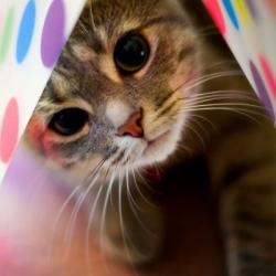 Ученые не пугают, но правду о кошке в доме надо знать