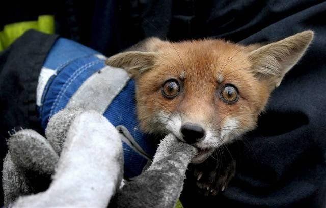 fox_20120409_00640_019 (640x409, 37Kb)