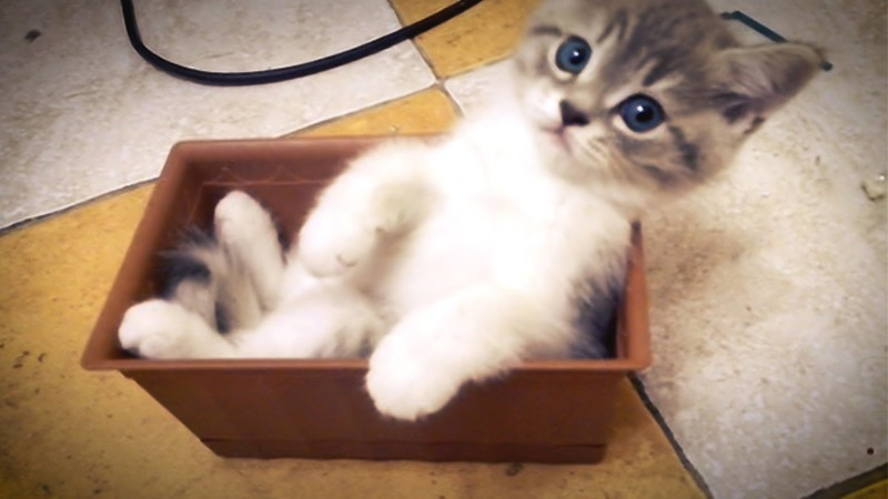 Кот в коробочке. Котенок забрался в цветочный горшок и вытворяет что-то невероятное