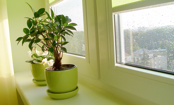 интернет комнатных растений