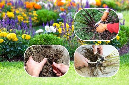 Наводим порядок на клумбе: как обновить старый запущенный цветник