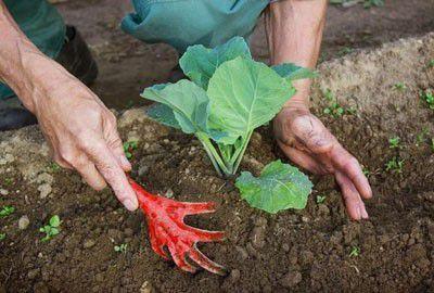САД, ЦВЕТНИК И ОГОРОД. Зачем окучивают овощи?